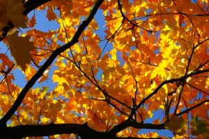 Useful Fire Safety Tips for the Fall